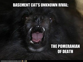 BASEMENT CAT'S UNKNOWN RIVAL: