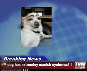 Breaking News - dog has extremley manish eyebrows!!!