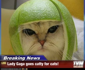 Breaking News - Lady Gaga goes catty for cats!