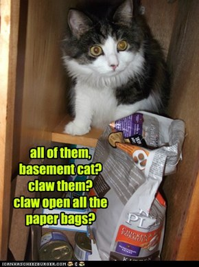 all of them,  basement cat? claw them? claw open all the paper bags?