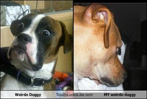 Weirdo Doggy Totally Looks Like MY weirdo doggy