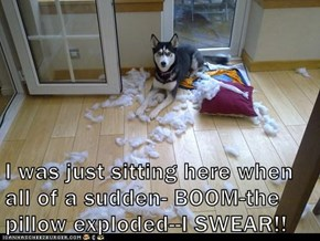 I was just sitting here when all of a sudden- BOOM-the pillow exploded--I SWEAR!!