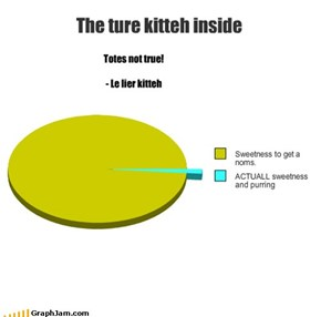 The ture kitteh inside