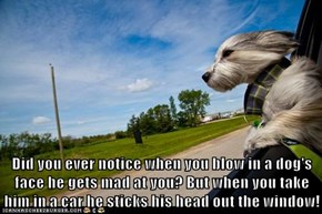 Did you ever notice when you blow in a dog's face he gets mad at you? But when you take him in a car he sticks his head out the window!