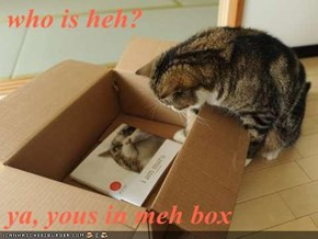who is heh?  ya, yous in meh box