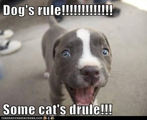 Dog's rule!!!!!!!!!!!!!  Some cat's drule!!!