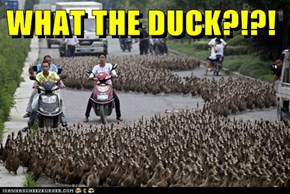 WHAT THE DUCK?!?!
