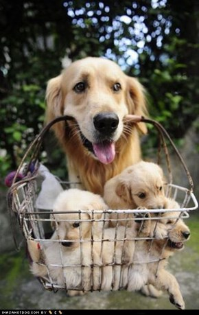 Cyoot Puppy ob teh Day: Basket of Puppies