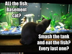 ALL the fish, Basement cat?