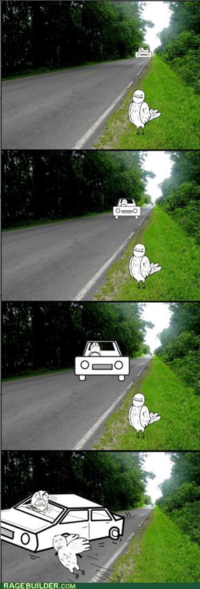 Bird Logic