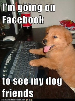 I'm going on Facebook  to see my dog friends