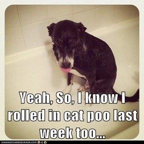 Yeah, So, I know I rolled in cat poo last week too...