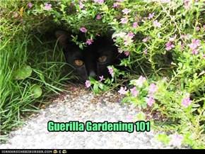 Guerilla Gardening 101