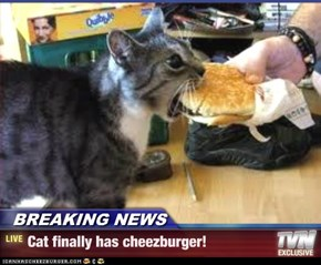 BREAKING NEWS - Cat finally has cheezburger!