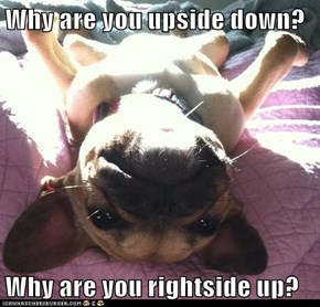 Why are you upside down?  Why are you rightside up?
