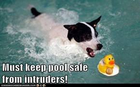 Must keep pool safe                       from intruders!
