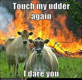 Touch my udder again  I dare you