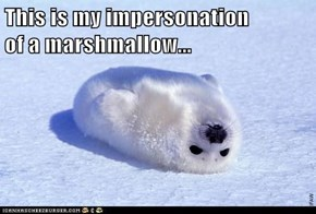 This is my impersonation                                         of a marshmallow...