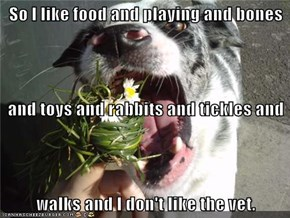 So I like food and playing and bones and toys and rabbits and tickles and walks and I don't like the vet.