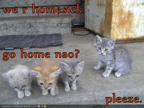 we r homesick. go home nao?  pleeze.