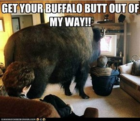 GET YOUR BUFFALO BUTT OUT OF MY WAY!!