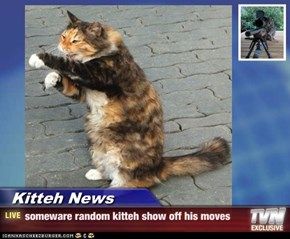 Kitteh News - someware random kitteh show off his moves