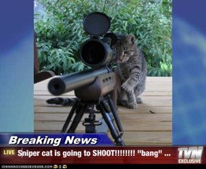 "Breaking News - Sniper cat is going to SHOOT!!!!!!!! ""bang"" ..."