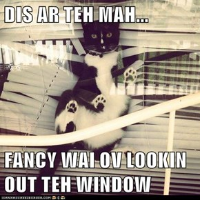 DIS AR TEH MAH...   FANCY WAI OV LOOKIN OUT TEH WINDOW