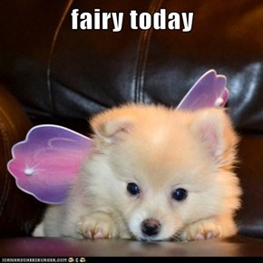 fairy today