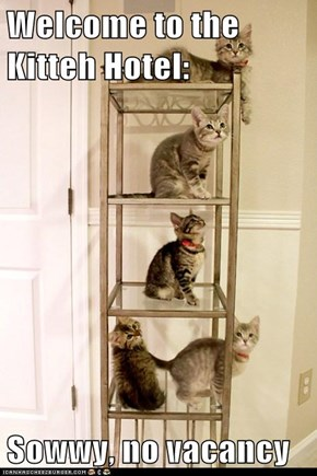 Welcome to the Kitteh Hotel:  Sowwy, no vacancy
