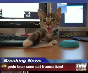 Breaking News - pedo bear seen cat traumatized