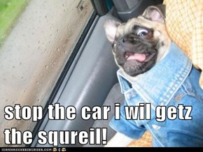 stop the car i wil getz the squreil!
