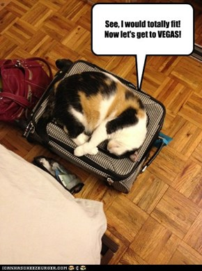 See, I would totally fit!  Now let's get to VEGAS!