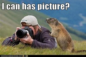 I can has picture?
