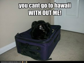 you cant go to hawaii WITH OUT ME!