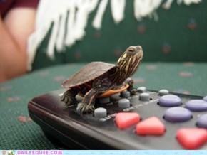 Turtle Remote