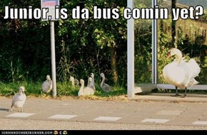 Junior, is da bus comin yet?