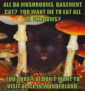 ALL DA MUSHROOMS, BASEMENT CAT?  YOU WANT ME TO EAT ALL DA SHROOMS?  YOU SURE?  AI DON'T WANT TO VISIT ALICE IN WUNDERLAND.