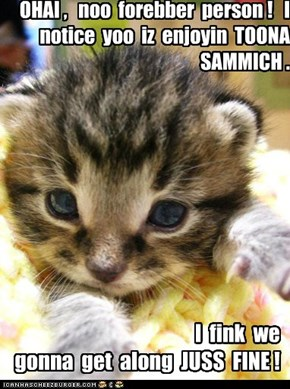 OHAI ,   noo  forebber  person !   I  notice  yoo  iz  enjoyin  TOONA  SAMMICH .