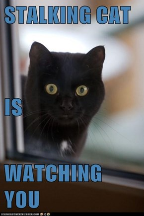 STALKING CAT IS WATCHING YOU