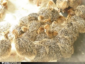 Baby Ostrich Pile