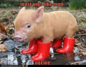 most pigs like mud...  not me.