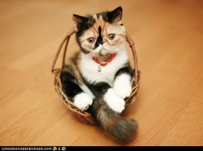 Cyoot Kitteh of teh Day: Basket of Joy