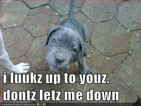 i luukz up to youz. dontz letz me down