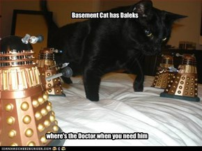 Basement Cat has Daleks