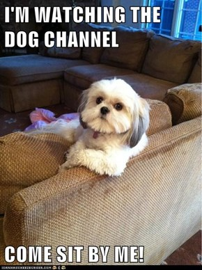 I'M WATCHING THE DOG CHANNEL  COME SIT BY ME!