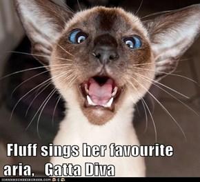 Fluff sings her favourite aria,   Gatta Diva