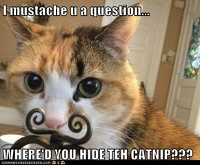 I mustache u a question...  WHERE'D YOU HIDE TEH CATNIP???