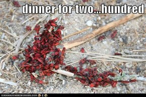 dinner for two...hundred