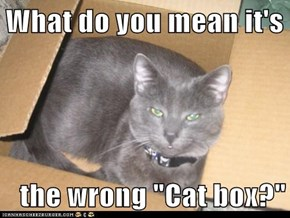 "What do you mean it's   the wrong ""Cat box?"""